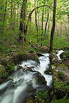 Spring flow at Fern Branch Falls, Porters Creek Trail