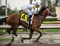 HALLANDALE BEACH, FL - February 3: Audible, #4, and Javier Castellano clench the Holy Bull Stakes (Grade II) for trainer Todd Pletcher at Gulfstream Park on February 3, 2018 in Hallandale Beach, FL. (Photo by Carson Dennis/Eclipse Sportswire/Getty Images.)