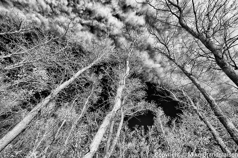 Trees and clouds. Seine River Forest, Winnipeg, Manitoba, Canada
