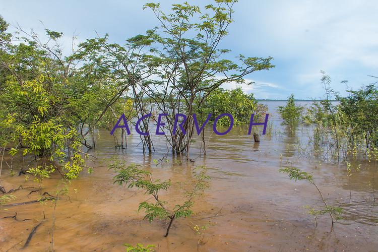 Floresta de várzea na margem do Rio Tefé, no estado do Amazonas, Brasil.<br /> .<br /> .<br /> Imagem feita em 2017 durante expedição científica para a região do Lago Tefé, Tefé, Amazonas, Brasil. A expedição, financiada pelo  Conselho Nacional de Desenvolvimento Científico e Tecnológico, teve o abjetivo de reencontrar espécies de anfíbios descritas pelo explorador Johann Baptist von Spix no ano de 1824.