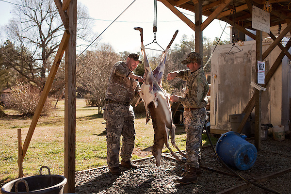 January 2, 2012. Chapel Hill, NC.. (left to right) Chris Mostiller and Boo Huskins, of Marion, NC, skin a buck on the racks out back of Norman's Deer Processing & Sausage Making. Hunters who bring deer for processing must skin and clean the deer before Norman takes it for curing and butchering.. Norman's Deer Processing & Sausage Making has been serving private customer's for over 20 years. Hunters bring their deer in to be processed into all cuts of venison and several types of sausage.