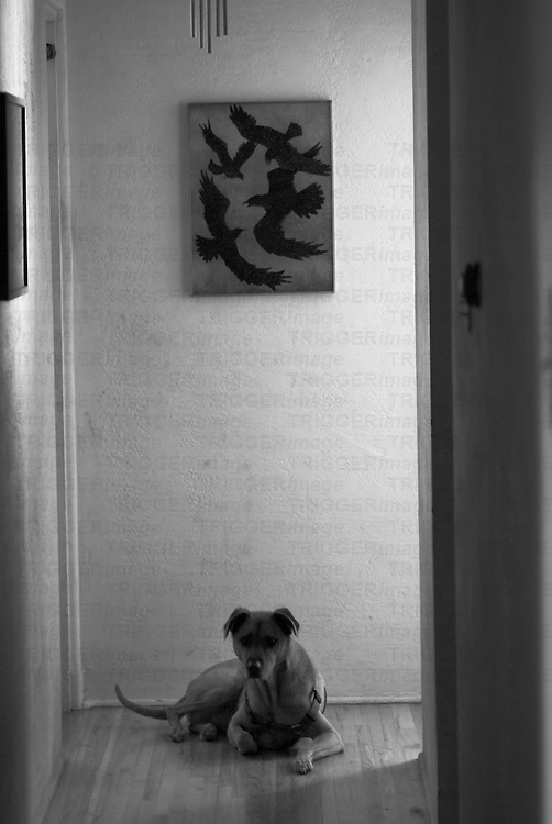 a dog sits at the end of a hallway with a painting of crows above him in a home in suburban albuquerque, new mexico, usa