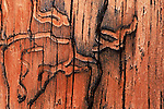 A wormwood design on the side of a cabin in Pike National Forest, near Fairplay, Colorado.