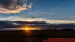 Sunset - Harpenden  9th August 2015<br /> <br /> Photo:  - Richard Washbrooke Photography
