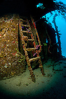 Ladder on the Prince Albert wreck off the island of Roatan, Honduras.