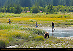 Brown Bear approaching Fishermen, Silver Salmon Creek, Lake Clark National Park, Alaska