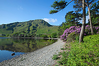 Ireland, County Galway, Connemara National Park, near Letterfrack: Kylemore Lough with Rhododendrons | Irland, County Galway, Connemara National Park, bei Letterfrack: der Kylemore Lough