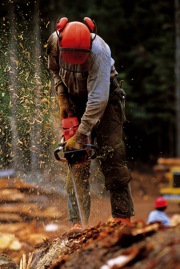 A logger uses a chainsaw to cut up a freshly cut tree. Alaska.