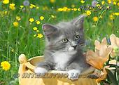 Marek, ANIMALS, REALISTISCHE TIERE, ANIMALES REALISTICOS, cats, photos+++++,PLMP2464,#a#