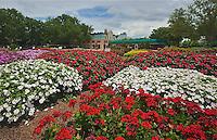 RD- Epcot Scenics at Disney, Orlando FL 5 14