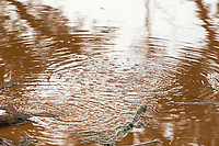 BRUMADINHO, MG, 25.01.2019:ROMPIMENTO DA BARRAGEM EM BRUMADINHO. Desastre ambiental na represa da Cia Vale, em Corrego do Feijao-Brumadinho, região metropolina de Belo Horizonte, MG, na tarde desta sexta feira (25) (foto Giazi Cavalcante/Codigo19)
