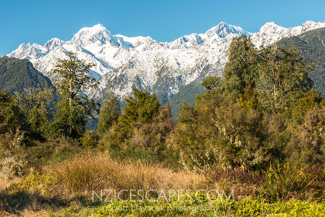 Winter morning on farmland near Fox Glacier with views of Mt. Cook and Mt. Tasman of Southern Alps, Westland National Park, West Coast, World Heritage Area, South Westland, New Zealand
