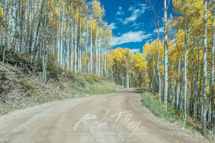 US, CO, Gunnison NF, Autumn Color at Kebler Pass