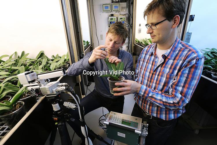 Foto: VidiPhoto<br /> <br /> BUNNIK - Sander Hogewoning en Govert Trouwborst van Plant Lighting uit Bunnik aan het werk met een lichtproef bij phalaenopsis. Door natuurlijk licht te combineren met belichtingsmethodieken kan berekend worden wat de meest optimale wijze van belichten (en dus kwalitatieve groei)  is. Op deze wijze kan 30 procent bespaard worden op energie bij phalaenopsiskwekers.