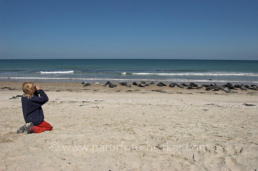 Kind, Mädchen beobachtet Kegelrobben und Seehunde aus nächster Nähe mit dem Fernglas, Helgoland, am Strand der Düne, Kegelrobbe, Kegel-Robbe, Halichoerus grypus, gray seal und Seehund, See-Hund, Phoca vitulina, harbor seal, common seal