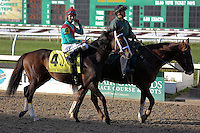 January 17, 2015: Infinite Magic (KY) with Robby Albarado in the Col. E.R. Bradley Handicap at the New Orleans Fairgrounds course. Steve Dalmado/ESW/CSM