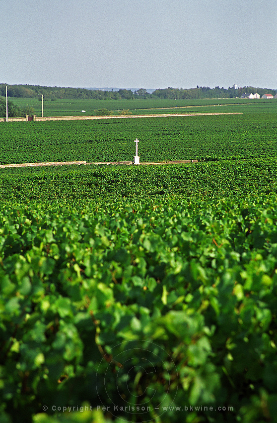 View over the famous Grand Cru Romanee Conti (foreground), Richebourg (left) and Saint Vivant (back) vineyard with the famous stone cross, Vosne, Bourgogne