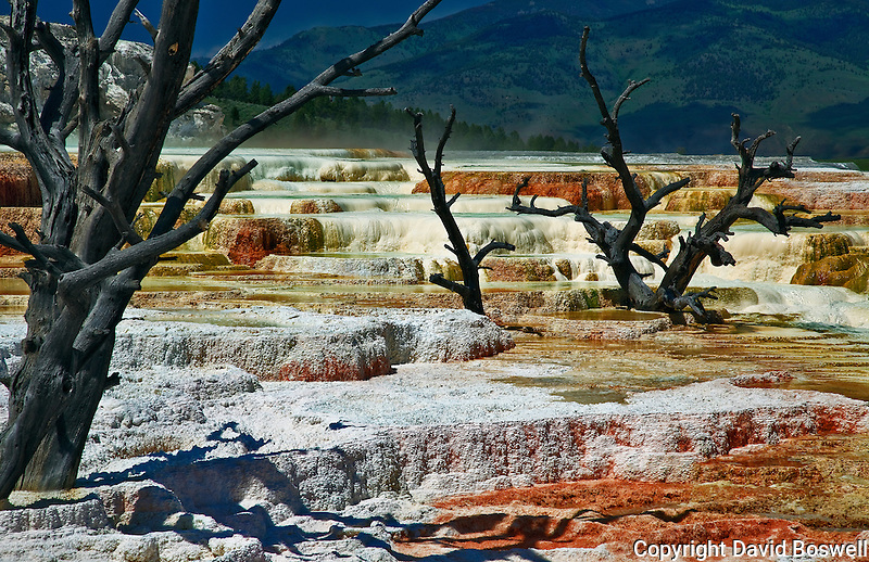 Mammoth Terraces at Mammoth Hot Springs, Yellowstone National Park