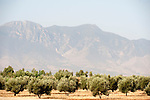 View of Atlas Mountains, Near Lalla Takerkoust, South Marrakech, Morocco, with Olive trees in foreground