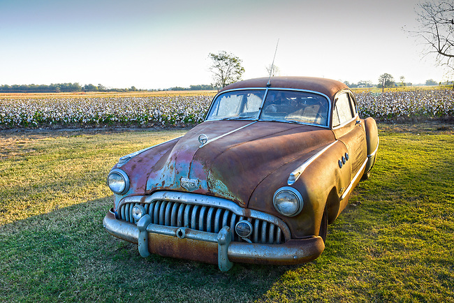 A vintage 1950 Buick rusting away in front of a cotton field in Clarksdale, Mississippi.