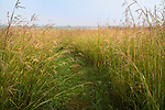Nachusa Grasslands Natural Area, Illinois:<br /> Path through a summer tallgrass prairie with big bluestem and native grasses, Nachusa Grasslands, Nature Conservancy