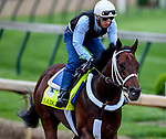 LOUISVILLE, KENTUCKY - APRIL 30: Haikal, trained by Kiaran McLaughlin, exercises in preparation for the Kentucky Derby at Churchill Downs in Louisville, Kentucky on April 30, 2019. John Voorhees/Eclipse Sportswire/CSM