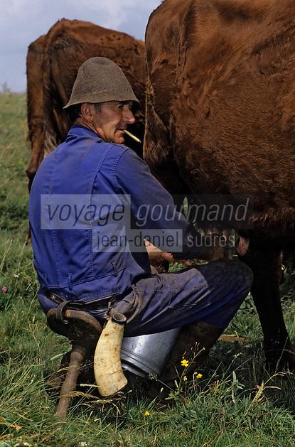 Europe/France/Auvergne/15/Cantal/Parc Régional des Volcans/Env d'Allanche: Buron de la Croix Blanche - La traite [Non destiné à un usage publicitaire - Not intended for an advertising use] [<br /> PHOTO D'ARCHIVES // ARCHIVAL IMAGES<br /> FRANCE 1980