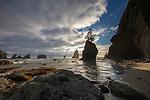 USA, Washington, Olympic National Park, Shi Shi Beach
