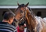 LOUISVILLE, KY - MAY 03: Magnum Moon gets a bath after exercising in preparation for the Kentucky Oaks at Churchill Downs on May 3, 2018 in Louisville, Kentucky. (Photo by Scott Serio/Eclipse Sportswire/Getty Images)