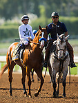 ARCADIA, CA - APRIL 07:  Mike Smith and Justify #6 before the Santa Anita Derby at Santa Anita Park on April 07, 2018 in Arcadia, California.(Photo by Alex Evers/Eclipse Sportswire/Getty Images)