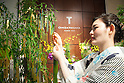 A member of staff wearing traditional Japanese kimono hangs her wishes on a bamboo tree decorated with gold and platinum paper strips (Tanzaku) in Ginza, Tokyo on July 3, 2015. It is Japanese custom to write a wish on a paper strip and hang this on a tree to celebrate the annual festival of Tanabata. After the festival the store will offer the gold and platinum strips to the Akasaka's Hie-jinja shrine. (Photo by Rodrigo Reyes Marin/AFLO)