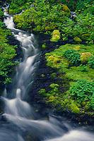 Pansy Creek<br /> Mt. Hood National Forest<br /> Cascade Range<br /> Oregon