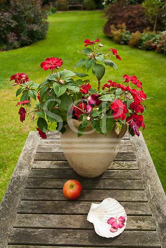 Surbiton, Surrey. Begonias in a pot, apple, shell on a suburban garden table.