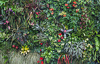 Living wall, green tapestry in San Francisco Conservatory of Flowers