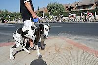 A dog looking the peloton of cyclists during the stage of La Vuelta 2012 between Logroño and Logroño.August 22,2012. (ALTERPHOTOS/Paola Otero) /NortePhoto.com<br /> <br /> **SOLO*VENTA*EN*MEXICO**<br /> **CREDITO*OBLIGATORIO**<br /> *No*Venta*A*Terceros*<br /> *No*Sale*So*third*<br /> *** No Se Permite Hacer Archivo**<br /> *No*Sale*So*third*