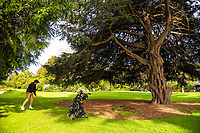 Chris Upton chips out of the trees to the 13th. 2017 Asia-Pacific Amateur Championship Media and Partner Golf Day at Royal Wellington Golf Club in Wellington, New Zealand on Monday, 16 October 2017. Photo: Dave Lintott / lintottphoto.co.nz
