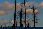 Winter landscape, Yellowstone National Park, Wyoming