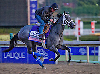 Dancing House, trained by Kiaran McLaughlin, trains for the Breeders' Cup Juvenile Fillies at Santa Anita Park in Arcadia, California on October 30, 2013.
