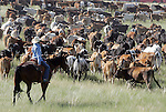 MICHAEL SMITH/WTE..A young cowgirl keeps an eye on cattle as they move through a field north of Cheyenne Sunday morning.   Over 700 head of Corriente long horned steers were part of the 2 mile long cattle drive along I-25 to support the Frontier Days Rodeo...