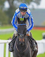 Theo's Charm ridden by Leighton Aspell and trained by Nick Gifford during Horse Racing at Plumpton Racecourse on 4th November 2019