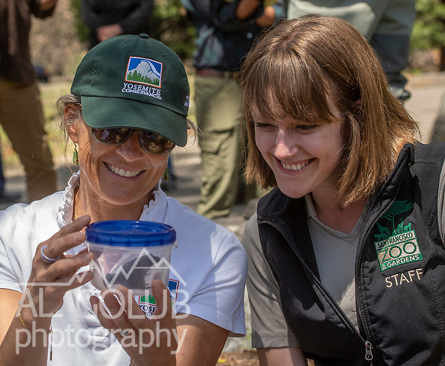 Schuyler Greenleaf, Projects Director, Yosemite Conservancy, releases a Red-Legged Frog. Yosemite Conservancy has generously funded the Red-Legged Frog reintroduction program for the past several years.  Photo by Al Golub, Yosemite Conservancy. All photos may be published in print and electronic media. These images have not been altered.