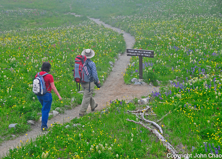 Hikers at Lower Tipsoo Lake Wildflower Field, Mount Rainier National Park