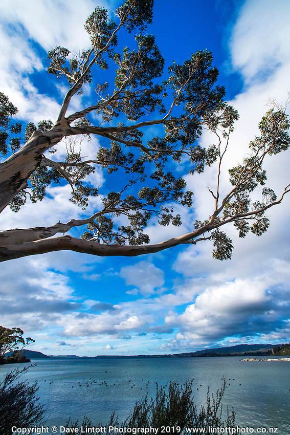 Bay Of Plenty Regional Council in Rotorua, New Zealand on Thursday, 6 June 2019. Photo: Dave Lintott / lintottphoto.co.nz