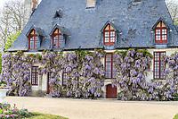 France, Indre-et-Loire (37), Chenonceaux, château et jardins de Chenonceau, le jardin de Diane de Poitiers et la Chancellerie couverte de glycine