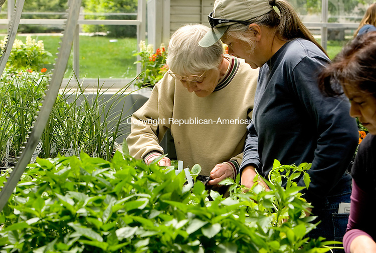 WOODBURY, CT- 05 MAY 2008 --051008JS25-Barbara Wehman and Laura Miller both of Roxbury, pick out vegatable plants during the Nonnewaug High School FFA's plant sale on Saturday. <br /> Jim Shannon / Republican-American