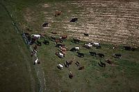 aerial photograph cattle Sonoma County, California