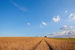 Europa, DEU, Deutschland, Nordrhein Westfalen, NRW, Rheinland, Niederrhein, Toenisberg, Schaephuysener Hoehen, Agrarlandschaft, Himmel, Wolken, Kategorien und Themen, Wetter, Himmel, Wolken, Wolkenkunde, Wetterbeobachtung, Wetterelemente, Wetterlage, Wetterkunde, Witterung, Witterungsbedingungen, Wettererscheinungen, Meteorologie, Bauernregeln, Wettervorhersage, Wolkenfotografie, Wetterphaenomene, Wolkenklassifikation, Wolkenbilder, Wolkenfoto....[Fuer die Nutzung gelten die jeweils gueltigen Allgemeinen Liefer-und Geschaeftsbedingungen. Nutzung nur gegen Verwendungsmeldung und Nachweis. Download der AGB unter http://www.image-box.com oder werden auf Anfrage zugesendet. Freigabe ist vorher erforderlich. Jede Nutzung des Fotos ist honorarpflichtig gemaess derzeit gueltiger MFM Liste - Kontakt, Uwe Schmid-Fotografie, Duisburg, Tel. (+49).2065.677997, ..archiv@image-box.com, www.image-box.com]