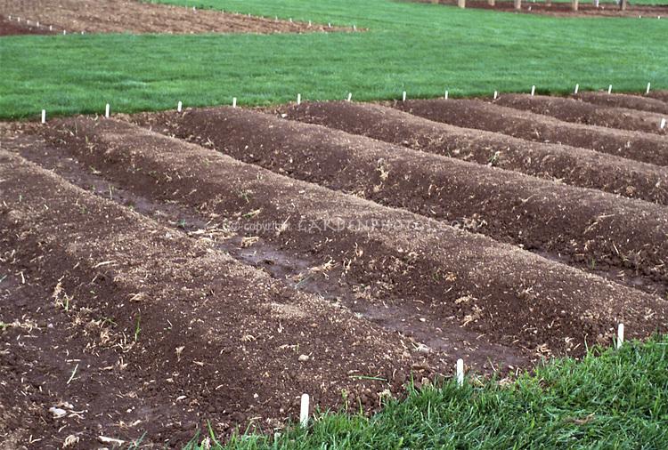 Good Soil For Raised Beds