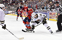 HERSHEY, PA - DECEMBER 01: Hershey Bears center Jason Megna (36) wins a face-off against Springfield Thunderbirds center Henrik Borgstrom (5) during the Springfield Thunderbirds at Hershey Bears on December 1, 2018 at the Giant Center in Hershey, PA. (Photo by Randy Litzinger/Icon Sportswire)