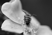 Bee, Film